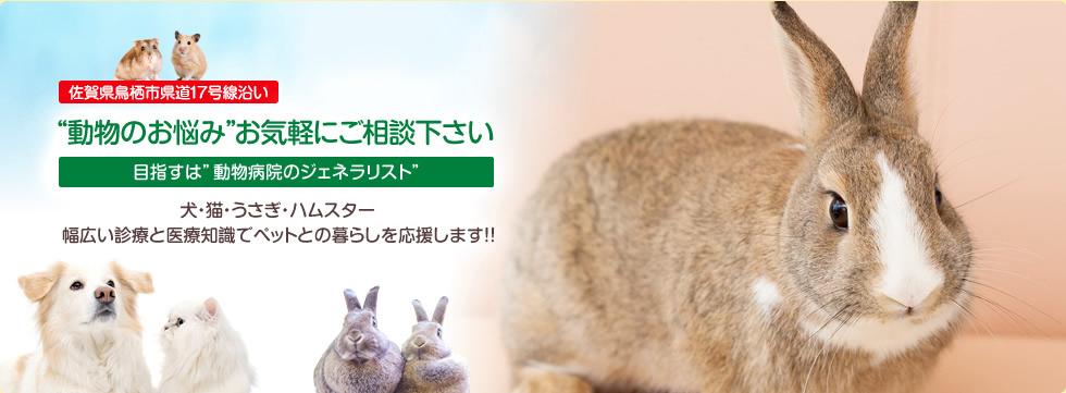 わかば動物病院(佐賀県鳥栖市の動物病院)